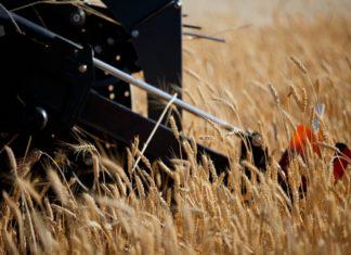 Российские аграрии продолжают сбор урожая