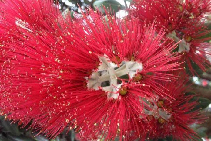 cvetok-krov-iisusa-na-kreste